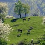 Príroda v Malohonte